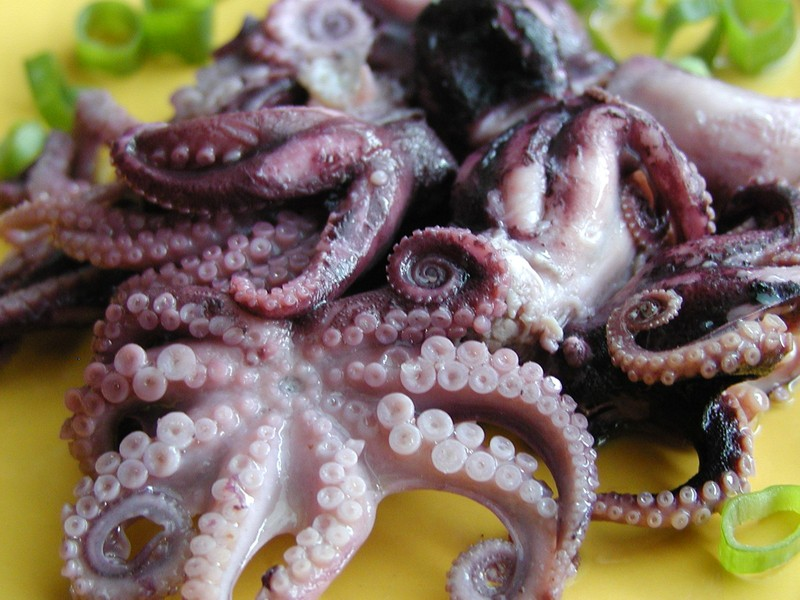 Salát z chobotniček